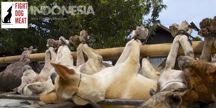 petition: Indonesia: Stop Dog Meat Abuse