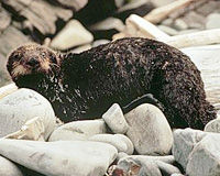 Help Prevent Another Exxon Valdez Spill