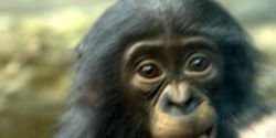 Protect ALL Chimpanzees- Captive and Wild