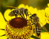 Pledge To Keep Bees Buzzing