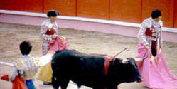 INTERNATIONAL CAMPAIGN AGAINST THE RETURN OF BULLFIGHTS TO ORAN/ALGERIA