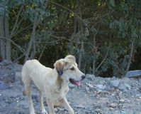 Stop the death sentence against community dogs in Turkey.