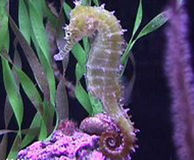 Ban the Trade of Seahorses