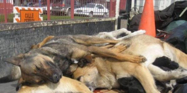Stop killing dogs in Chile, South America