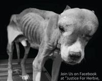 Demand Justice for Herbie the abused Lorain, Ohio dog