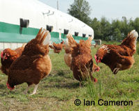 Take the Cage-Free Pledge