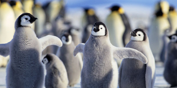 Raise Your Voice and Ask World Leaders to Protect Penguins