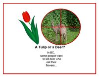 Boycott the CRD Deer Kill Plans