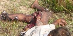 Srilanka: If this isn't GENOCIDE, WAR CRIME, Then What on Earth is?