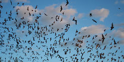 Save Bracken Bat Cave, The World's Biggest Bat Colony