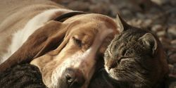Stop Killing Dogs & Cats For Their Meat in the USA