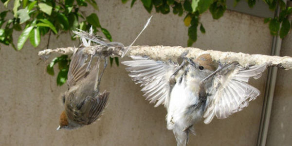 Enforce the Law on Bird Slaughter in Cyprus