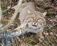 Stop the trapping of animals