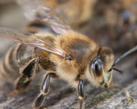 Ban Bee Killing Pesticides