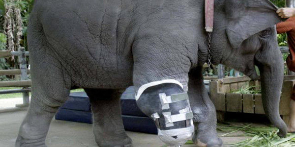AGAINST ELEPHANT ABUSE IN THAILAND
