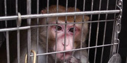Tell NYU Medical Center to STOP Animal Experiments