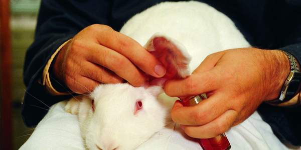 Congress: Don't Require Animal Testing for Cosmetics!
