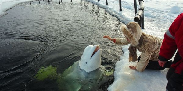 Stop Capturing and Training Beluga Whales to Entertain Humans!!