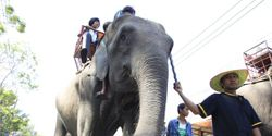 Asia - Stop Abusing, Smuggling and Trading the Elephants!!!