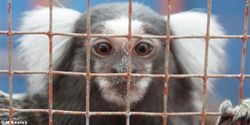 Pledge to Avoid Supporting the Trade in Primates as Pets