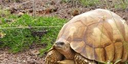 STOP Tortoise Smuggling in Madagascar