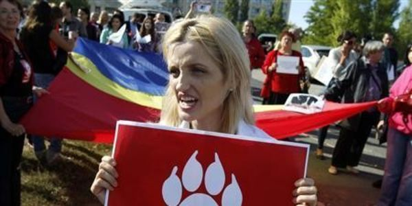 Romanian Stray Dogs Slaughtered On The Streets As 'Red Card For Romania' Spreads On Facebook