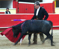 Say NO to Teaching Torture - Shut Down the Bullfighting School in San Diego!