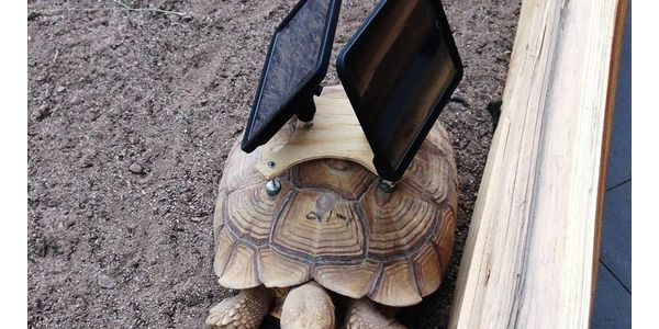 Art Exhibit Shouldn't Exploit Endangered Tortoises