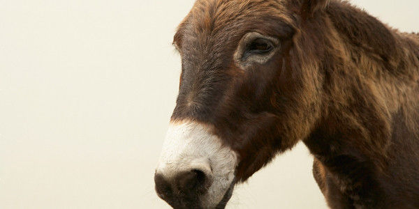 STOP DONKEY ABUSE IN MIJAS COSTA DE SOL
