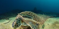 End Ghost Fishing - Demand an International 'Lost Net' Register