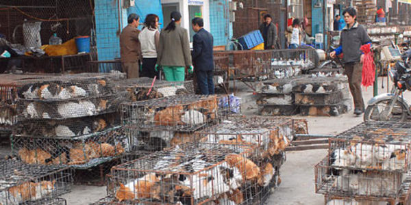 Demand an end to the needless torture of cats and dogs in China!
