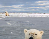 Give the ESA the power to protect Polar Bears from greenhouse gas emissions