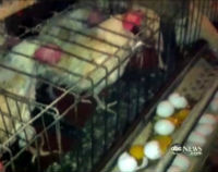 Tell Kreider Farms to Stop Lying About It Egg Production Methods