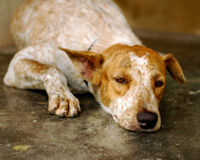 Colorado: Stop Animal Abuse and Neglect