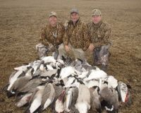 Tell NY to Stop Plans Mass Slaughter Canadian Geese