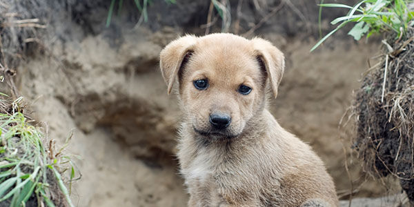 Lets make a stand for the Stray Puppies/Dogs in Russia