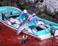 End Dolphin Slaughter in Japan