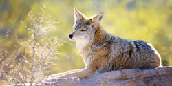 California: Ban Wildlife Killing Contests For Good