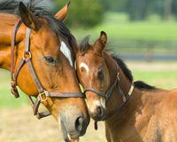 Stop Funding for Horse Slaughter Inspections