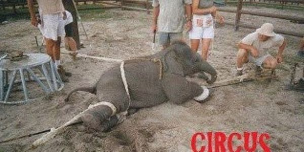 Tell LivingSocial to cancel its ticket deal that promotes Ringling Bros. Circus!