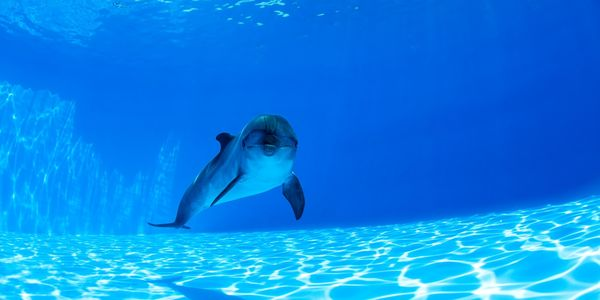 Dolphin in tank