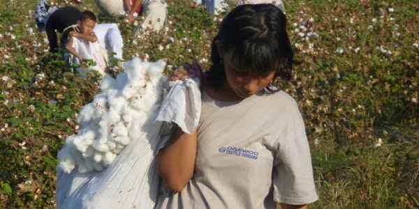 Daewoo: Help End Uzbek Cotton Slavery