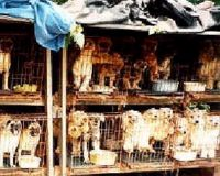 Make Puppy Mills Illegal in Florida!