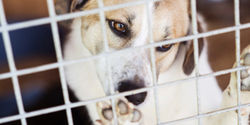 Support the Pet Safety and Protection Act
