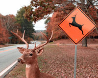 Stop Deer From Being Killed By Cars