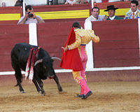 Ban Bullfighting in one of Spain's Largest Regions!