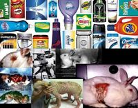 New Rules For Advertising Animal Tested Products