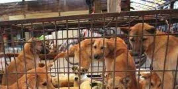 Stop Killing Dogs for Annual Yulin Dog-Eating Festival!!