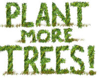 Plant Trees for The Future!