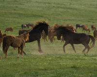 Please STOP the round-up and the slaughter of the wild horses in the Danube Delta